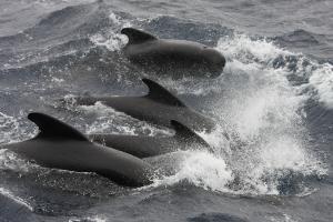 wl35_dolfijnen