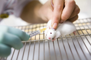 Vaccine test on laboratory mouse, applied by injection