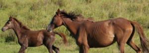 9_paarden